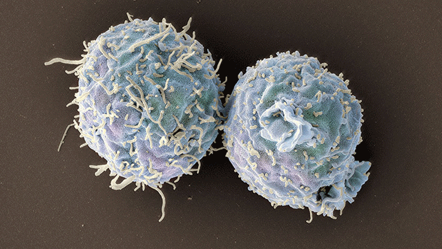 Engineered T Cells Promote Long-term Organ Transplant Acceptance