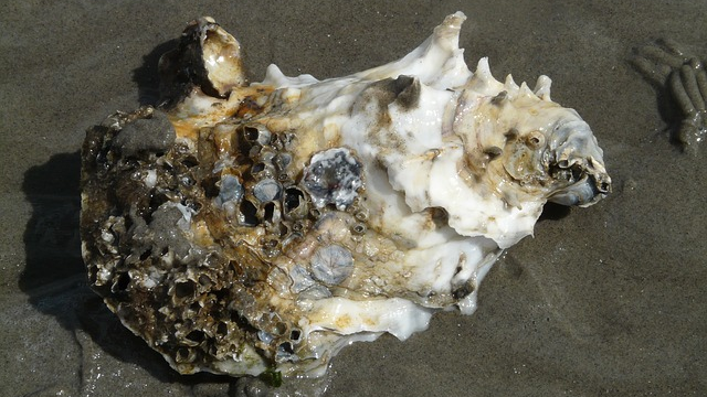 Even the Most Tolerant Oysters Under Threat