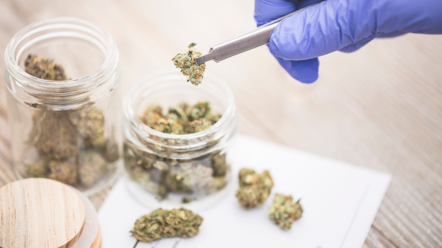 EVIO Labs Enters Canadian Cannabis Testing Market