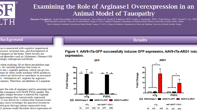 Examining the Role of Arginase1 Overexpression in an Animal Model of Tauopathy