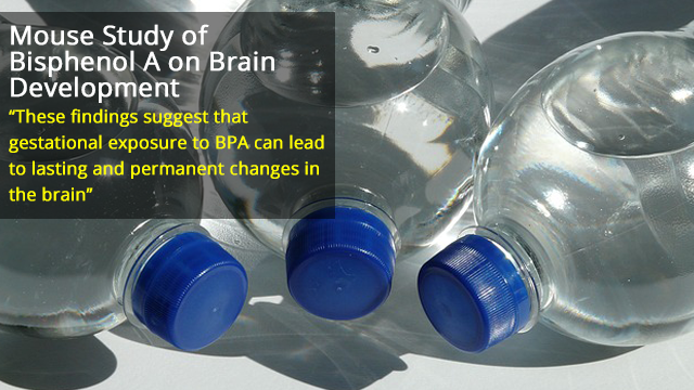 Exposure to Low Levels of BPA during Pregnancy Can Lead to Altered Brain Development