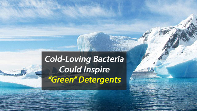 "Extremophile Bacteria Could Hold Key to ""Green"" Detergents"