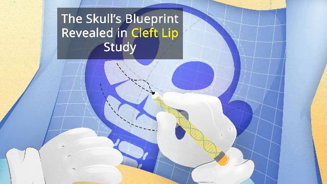 Facial Blueprint Study Suggests Epigenomic DNA is Responsible for Cleft Lip