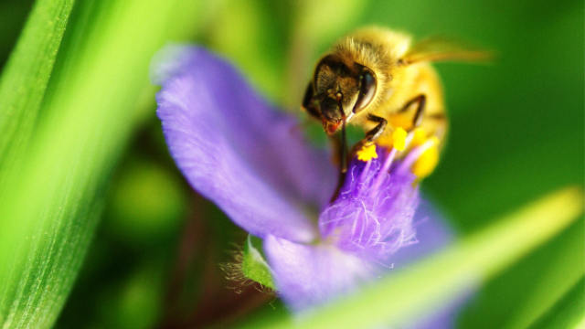 Bumblebees make false memories too