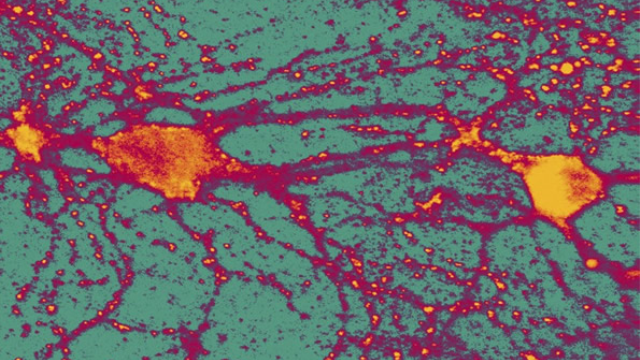 Aggression causes new nerve cells to be generated in the brain