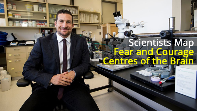 Fear and Courage Centres Mapped in the Brain