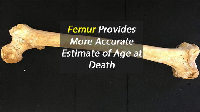 Femur Offers Better Measure of Age at Death