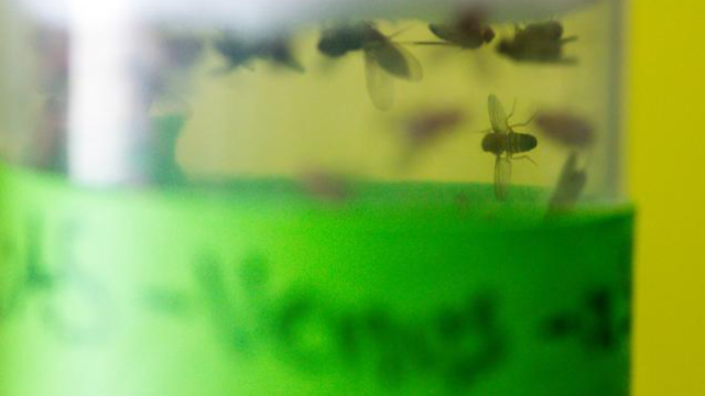 Fly Protein Has Protective Effect on Dopaminergic Neurons