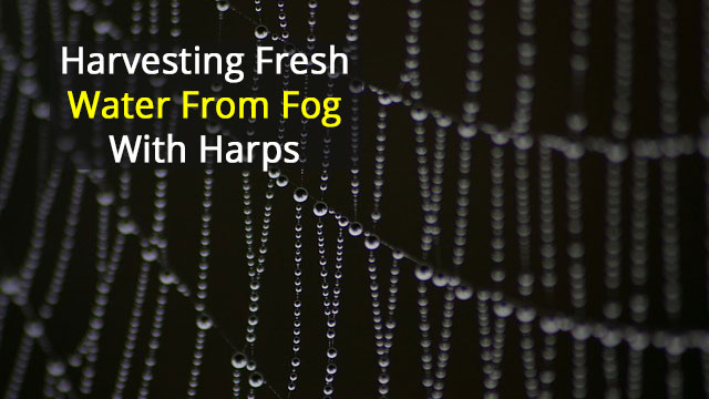Fog Harvesting with Harps