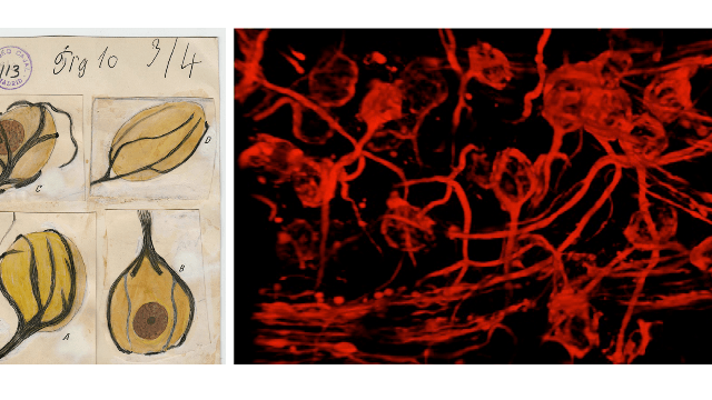 From Cajal To Now