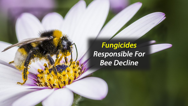 Fungicides Responsible for Bee Decline