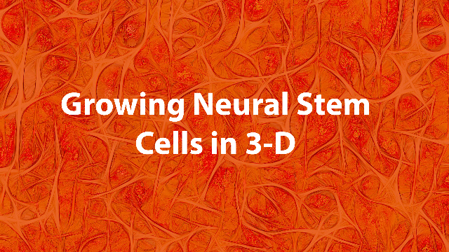 Gel Developed for Growing Large Quantities of Neural Stem Cells