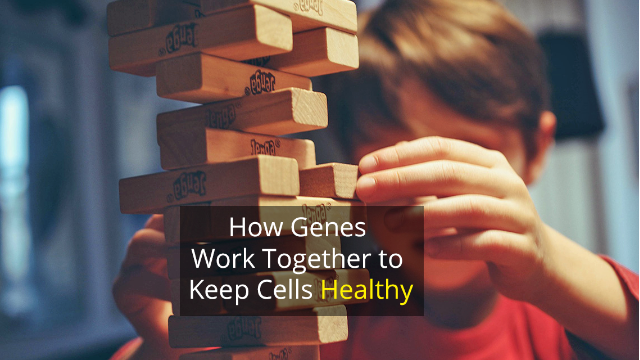 """Genetic Jenga"" Helps Understand How Our Genes Control Our Cells"