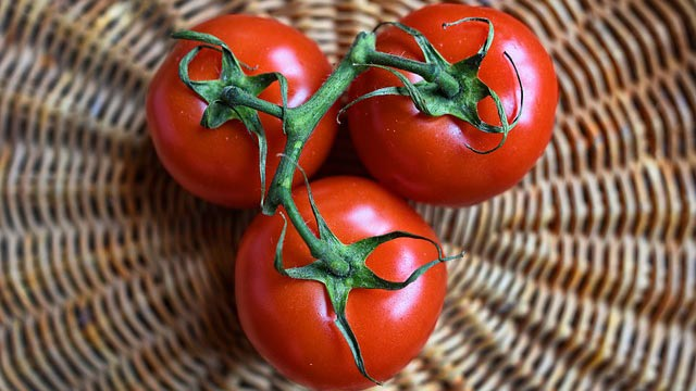 Genetically Engineered Spicy Tomatoes
