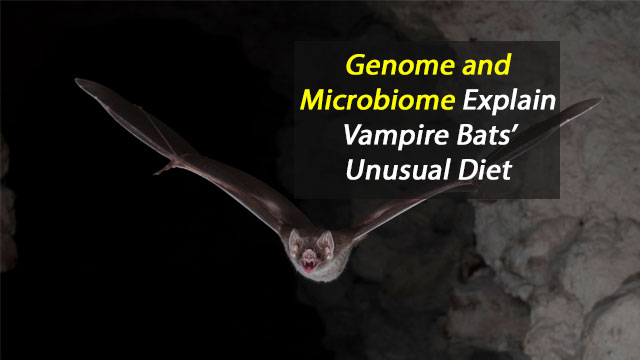 Genome and Microbiome Explain Vampire Bats' Unusual Diet