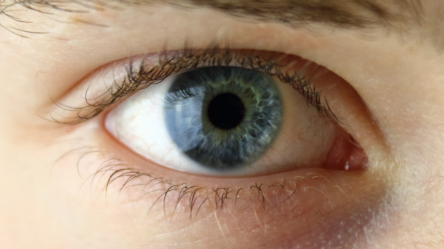 Getting an INSiGHT into Retinal Genes