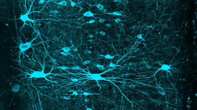 Graded Arrays of Spinal Neurons Help Our Brains Tell Our Limbs Apart