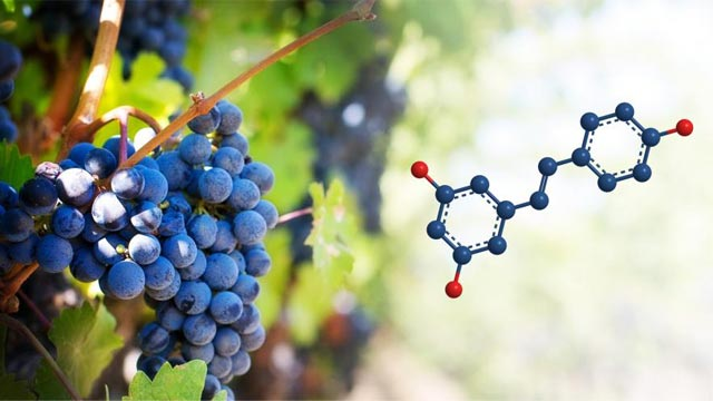 Grape Molecule Protects Against Cancer