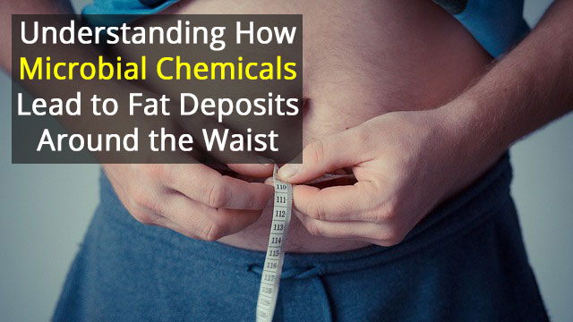 Gut Processes Identified that Drive Fat Build-Up Around the Waist