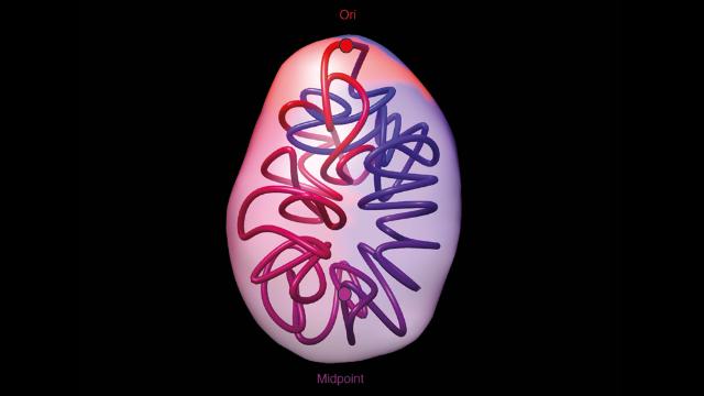 Hidden Structures Found in Bacterial DNA