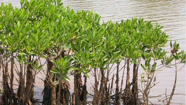 high-prevalence-of-antibiotic-and-heavy-metal-resistance-genes-found-in-indian-mangrove-microbial-307363