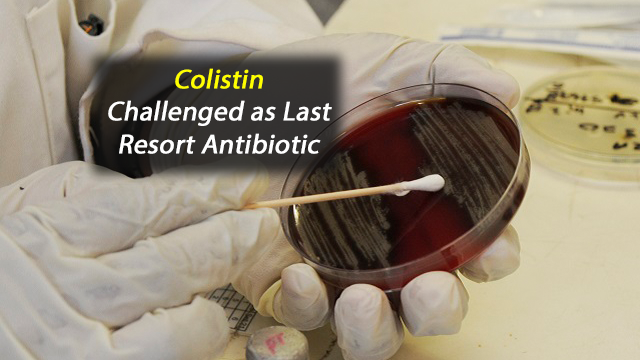 High Prevalence of Colistin-Resistant Bacteria in Food and Environmental Samples