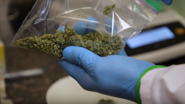 High Tech: Inside a Cannabis Testing Lab