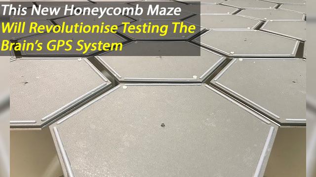 Honeycomb Maze: Novel test to study hippocampal-dependent spatial navigation
