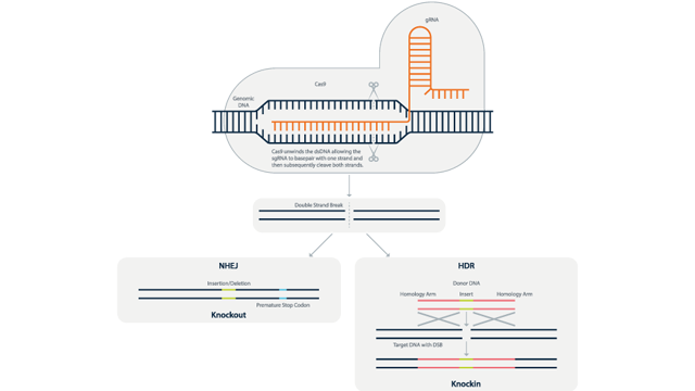 Horizon Reports Expansion of CRISPR License Rights with ERS Genomics