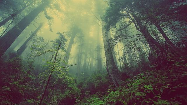 How do Forests Respond to Atmospheric Pollution?