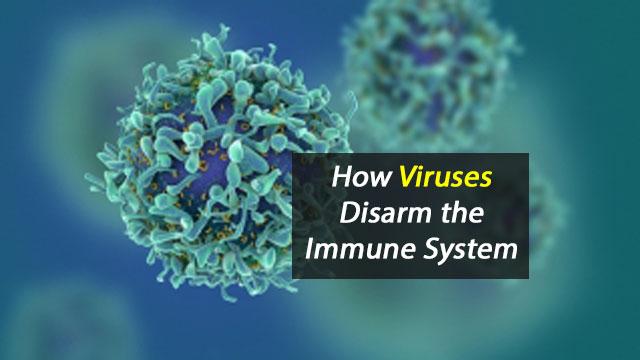 How Viruses Disarm the Immune System