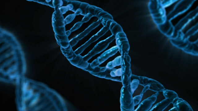 Identical Mutation, Different Symptoms: Researchers Outline 'Modified Penetrance' Hypothesis