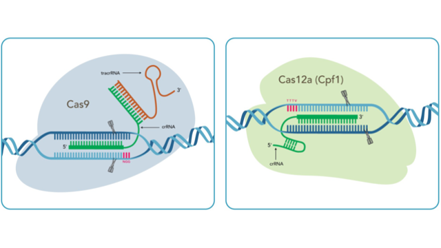 IDT Showcases CRISPR Expertise in Europe