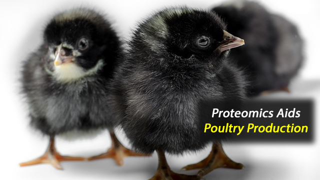 Improving Poultry Production Through Precision Fertility Management