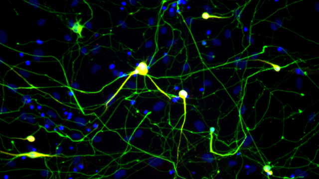 Induced Neuronal Cells Validated on an Epigenomic Level