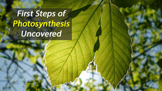 It's Givin' Me Excitations: Uncovering the First Steps of Photosynthesis