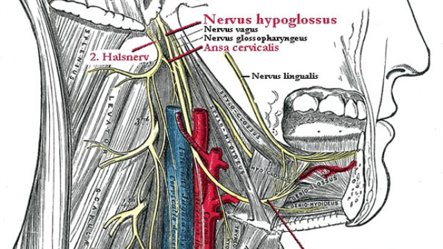 Study shows vagus nerve stimulation significantly reduces rheumatoid arthritis symptoms