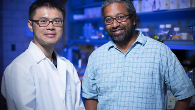 Researchers describe copper-induced misfolding of prion proteins