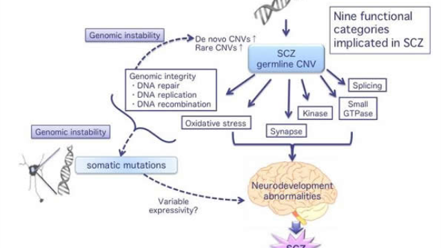 Analysis of genetic repeats suggests role for DNA instability in schizophrenia