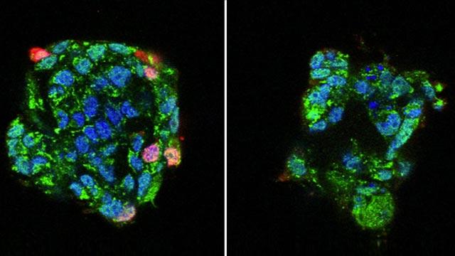 Key Molecule for Flu Infection, a Novel Target for Drug Development?