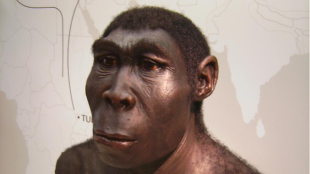 'Laziness' Helped Drive Homo erectus to Extinction