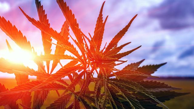 Legalizing Cannabis in U.S. Could Generate $100 Billion in Tax Revenue