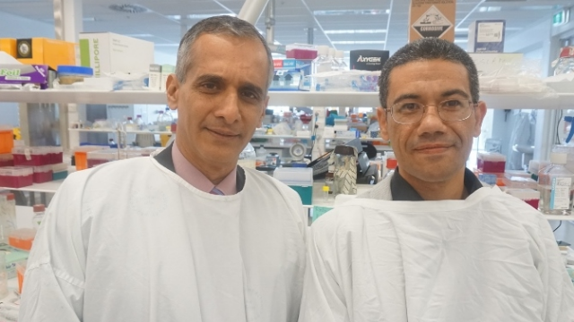 Liver Scarring Protein Identified in Breakthrough Study