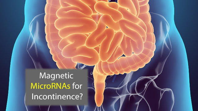 Magnetic MicroRNAs Could Help Treat Incontinence