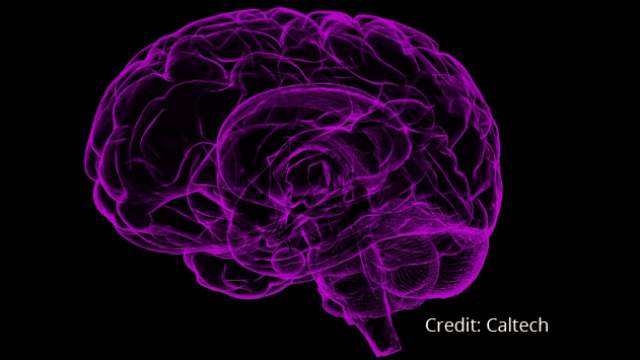 Major Neuroscience Initiative Launched