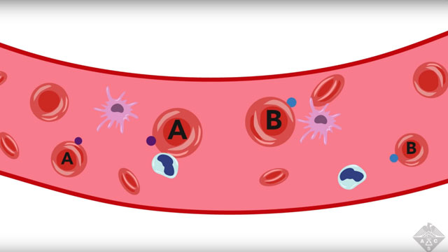 Making Universal Donor Blood From Other Blood Types
