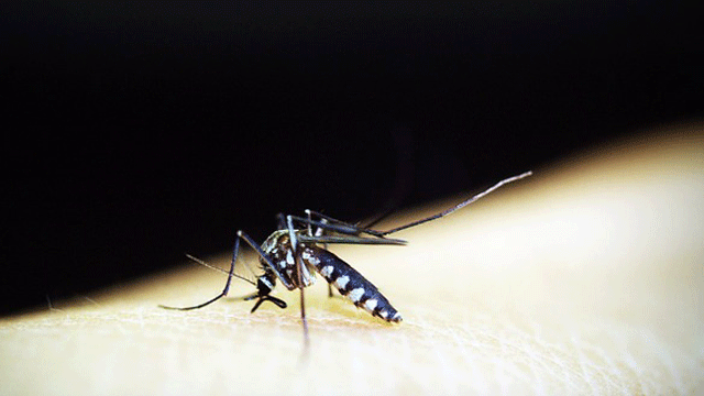 Malaria: Newly Discovered Compounds Offer Potential for Novel Treatment Development