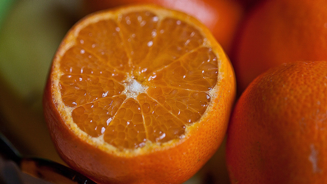 Mandarin Hybrid Resists Citrus Greening Disease