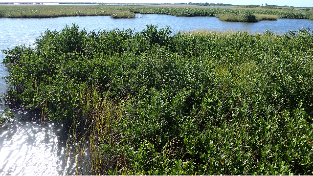 Mapping Blue Carbon in Mangroves
