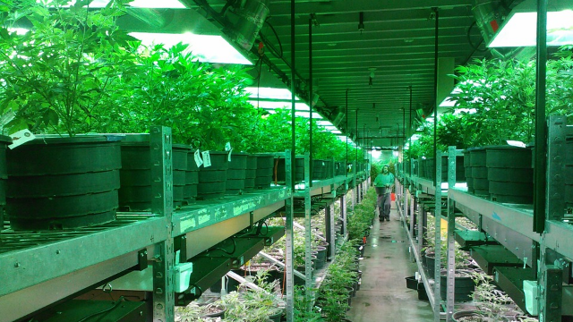 Marijuana in Maine: Will retail sales ever be legal?